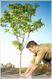 como-plantar-un-arbol.jpg